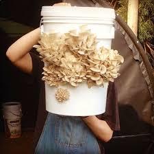 starting a mushroom garden 5 ways to get growing