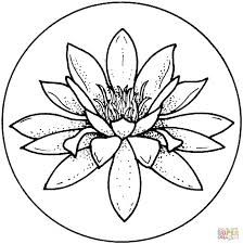 292 best lotus images on pinterest lotus water lilies and daisy