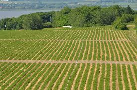 chambre r馮ionale d agriculture paca comment la région veut relancer l agriculture en provence made