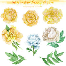 yellow peonies watercolor peony clipart digital printable clipart 300