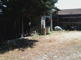 animali da cortile in centro abitato dal medio adriatico all idice quarto giorno franz 3