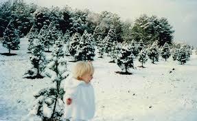 history u2014 rex christmas tree farm