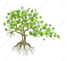 Oak Tree Drawing Tree With Roots Drawing Oak Tree Drawing Google Search Rebrand