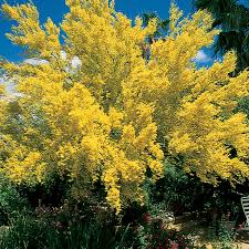 Plants For Front Yard Landscaping - landscape plants for the arizona desert arizona municipal water