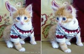 sweaters for cats cat sweater patterns diy cozy home