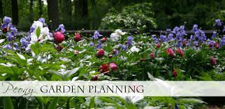peony garden planning designing with peonies