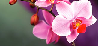 orchid plants orchid care
