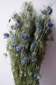 Wholesale Flowers Near Me Wholesale Dry Flowers Bunches Daisyshop For Dried Flowers