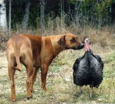 thanksgiving safety tips for pet parents