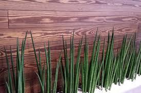 rivestimento in legno pareti rivestimenti in legno per bar ristoranti pub perlinato per pareti