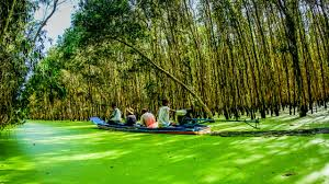tra tra su cajuput forest vietnam world heritages