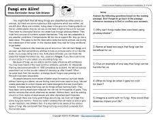 reading comprehension worksheets middle mediafoxstudio com