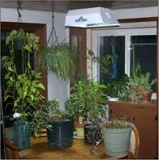 creating indoor garden in winter