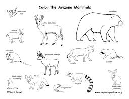 mammals coloring pages arizona habitats mammals birds amphibians reptiles