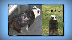 Best Product Hair Loss Best Pet Shampoo To Prevent And Cure Hair Loss In Dogs And Cats