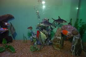 types of aquarium types of freshwater aquariums the aquarium setup filtration