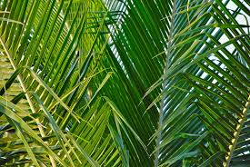 palms for palm sunday the challenge of palm sunday joint issues team