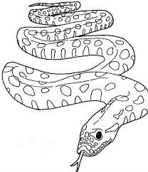draw anaconda snake colouring draw anaconda