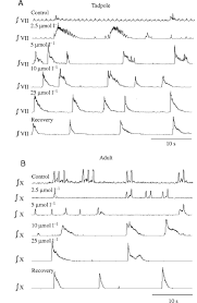 regulation of the respiratory central pattern generator by