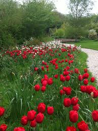 its not too late to plant spring bulbs amberley garden services