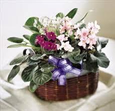 Order Flowers San Francisco - african violets colma florist funeral flowers san francisco