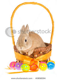 easter basket bunny of a rabbit sitting in an easter basket the colored eggs are