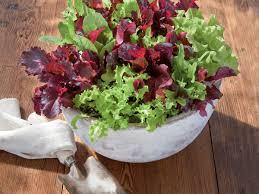 Garden For Family Of 4 Gardening Tips For Growing Lettuce Southern Living