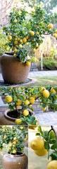 small backyard landscaping ideas do myself archives u2013 modern garden