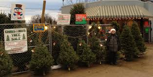 christmas trees on sale christmas trees for sale photo christmas