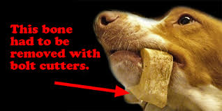 boxer dog vomiting after eating feeding your dog bones u2014 don u0027t do it and here u0027s why