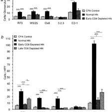 Normal Hn cd8 t cell depletion in hn did not prevent glomerular deposition of