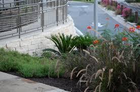 6 dependable ornamental grasses for commercial landscapes