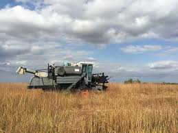 harvest seeds and native plants restoring prairie on the great plains harvest public media