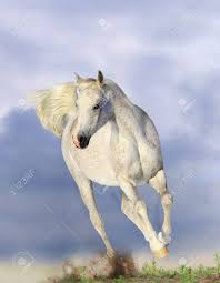 mustang horse running white arabian horse running in dust stock photo picture and