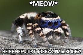 Peacock Meme - peacock spider imgur