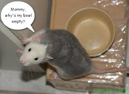 Rat Meme - cute rat meme sunshine scrapbook