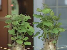 Patio Potato Planters How To Grow Potatoes In A Container Diy Network Blog Made