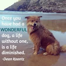 loss of dog 13 dog loss quotes comforting words when losing a friend
