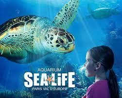 bureau vall voiron bureau vall馥 voiron 36 images sea aquarium marne la vallee 28