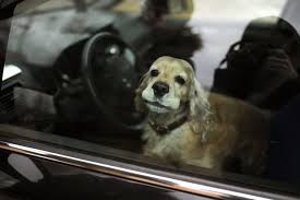 si e voiture loi que faire si on trouve un chien dans une voiture en plein soleil