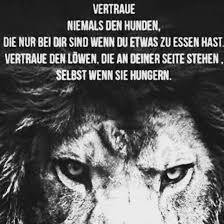 sprüche löwe zitate instagram löwe truhe wahrheit sprüche switzerland
