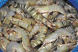 ornamental fish farming business plan