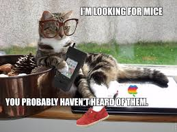 Hipster Cat Meme - hipster cat we love cat
