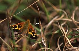 march 2014 winged butterflies