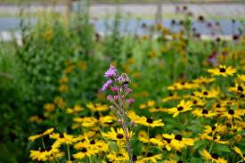 native prairie plants small corner native plant garden