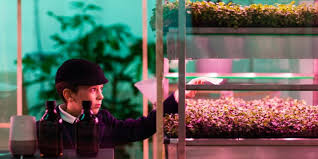 What Is An Indoor Garden Called - ikea has debuted an indoor farm that grows greens three times