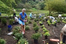 Botanical Gardens Seattle Seattle Garden Club Helps Plant Centennial Garden The Arboretum