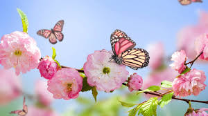photo collection pink flower butterfly wallpaper