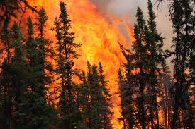 Wild Fires In Canada Now by Four Million Acres Burned And A Few Questions About Alaska U0027s