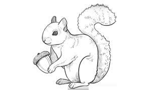 how to draw a squirrel как нарисовать белку youtube
